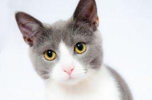 Körpertemperatur bei Katzen messen
